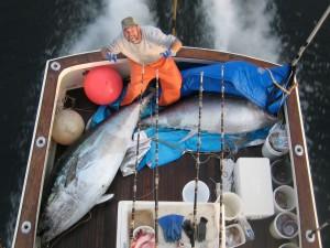 Gloucester tuna fishing charters