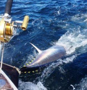 Tuna Fishing Charters MA