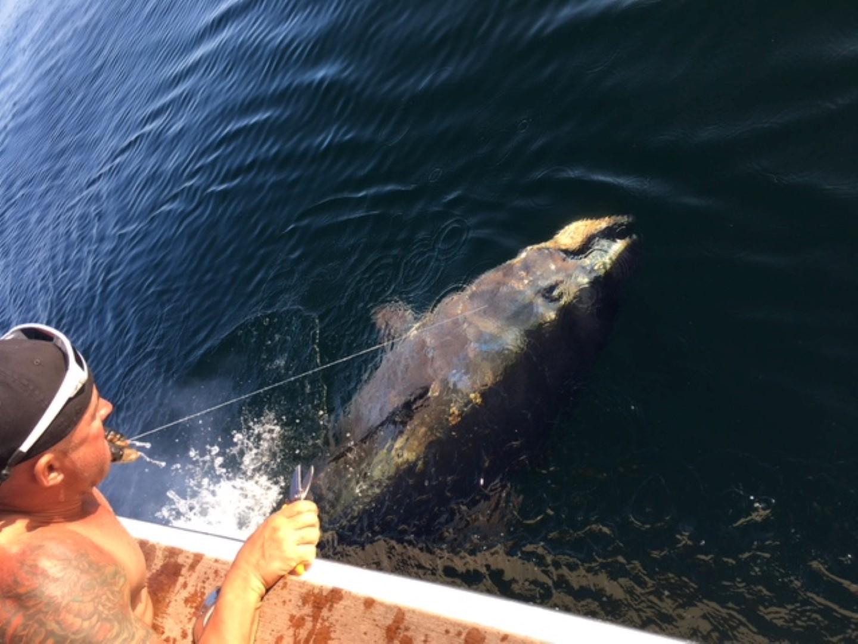 Bluefin Battle Underway on Tuna Hunter