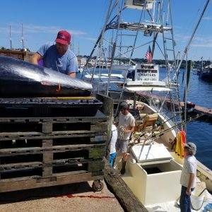 Bluefin Tuna at the Buyer, Tuna Hunter Fishing Charters