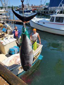 Bluefin Tuna on Tuna Hunter